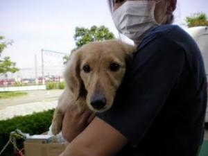 Dog care project  抱っこ♥