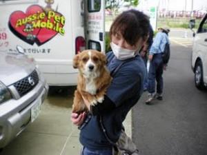 Dog care project  抱っこパート2♥