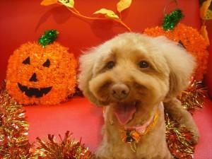 かぼちゃのお化けにコーフンしましたっ☆by.クローバー
