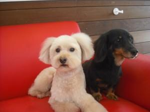 ★バニラ&チェリーです★
