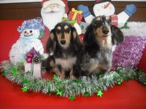 あは☆キラキラ~クリスマスモードでちっ☆