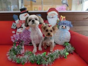 ココ&リリです♪素敵なクリスマスになりますように☆