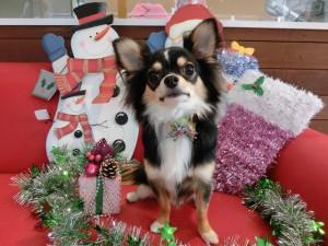 クリスマスの次は。。。年越しでつね?
