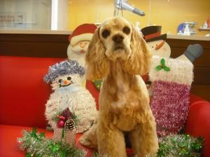 ジュエルもね、楽しいクリスマスになるといいな☆