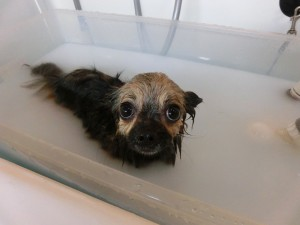 ぶくぶくお風呂気持がいいね!