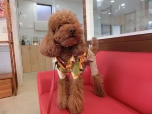 トイコはアロハの上下着てみたよ!