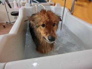 ぬくい、ぬくい♪