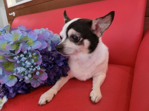 このお花食べれるの?