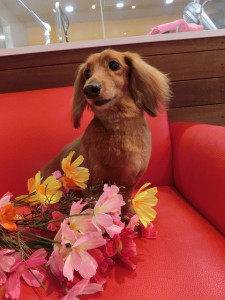 お花が似合う男の子♪