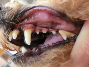 歯磨き前(左)