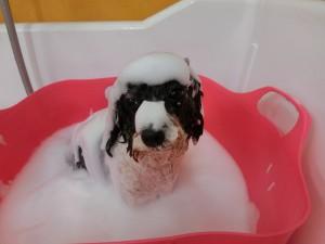 今日も泡風呂です♪