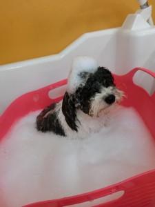 お風呂大好きよん♪