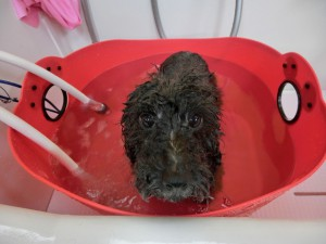 お風呂は大好き♡