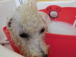 お風呂眠い。。。