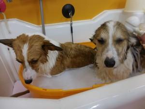 仲良くお風呂❤
