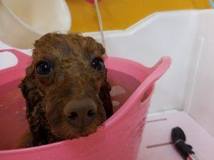 重炭酸泉浴