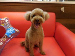 元気いっぱい良い笑顔☆初めましてのトトちゃん☆
