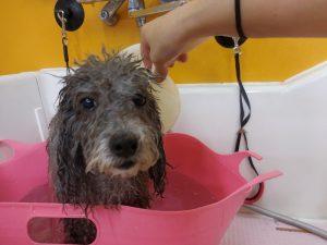 炭酸泉浴♪