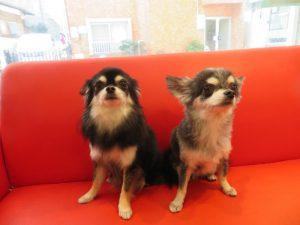 ドラジェちゃん(左)&ショコラちゃん(右)